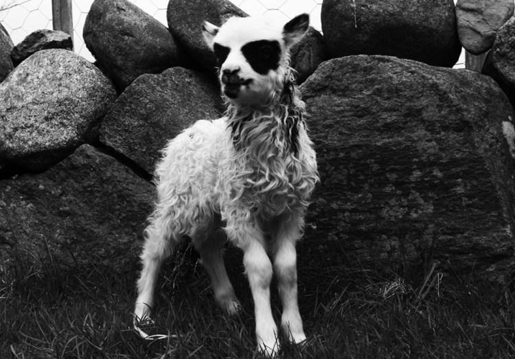 agnello-corpsepaint