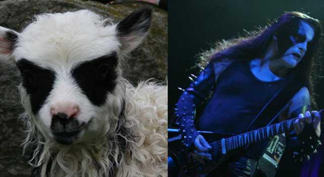 blackmetal-sheep-corpsepaint